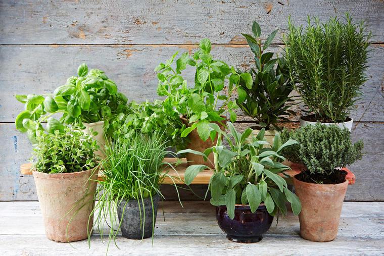 Escolha as ervas de que mais gosta - plantar é fácil!